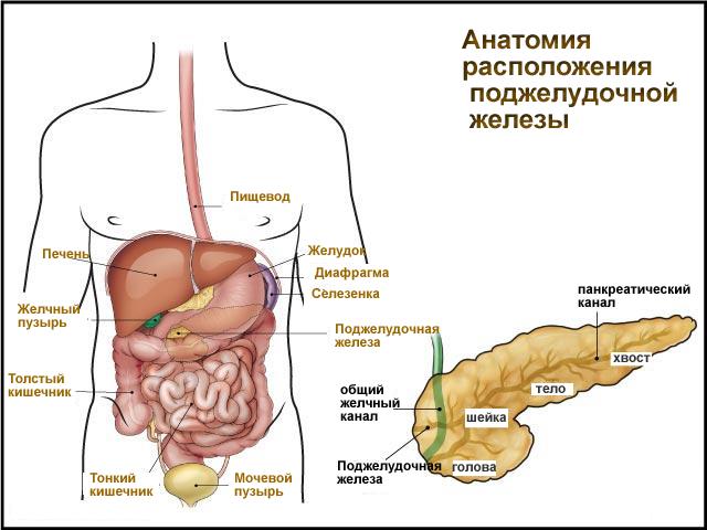 Как лечат гепатит с у детей до года